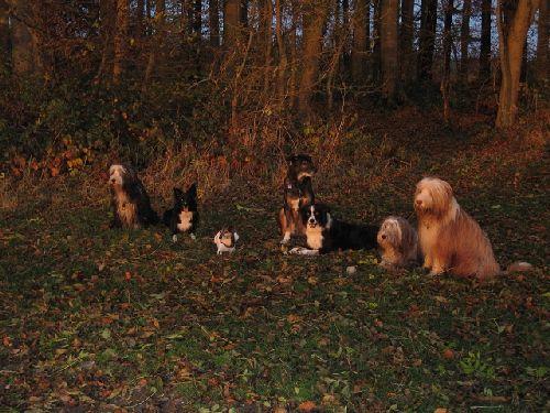 Sicherheit den meisten spaß hatte traf man ja nicht nur hunde